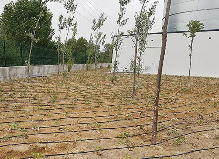 Jardines con plantas sin necesidad de agua adicional